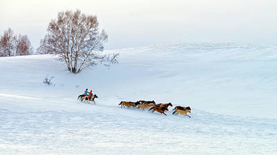 Running Horses Photograph - Racing On Snow by Hua Zhu