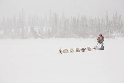 Racing Through The Falling Snow Art Print by Tim Grams