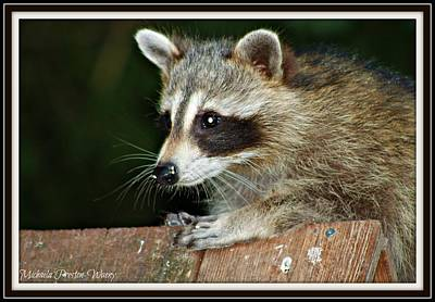 Photograph - Racoon 2 by Michaela Preston