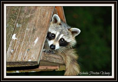 Photograph - Racoon by Michaela Preston