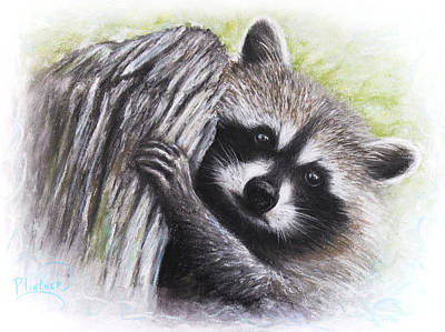 Art Print featuring the drawing Raccoon  by Patricia Lintner