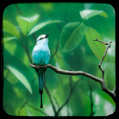 Photograph - Racquet Tailed Roller by Gary Heller