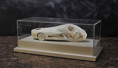 Jaguar Xj220 Sculpture - Racuar by Trevor Neal
