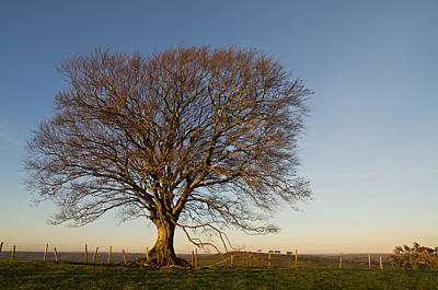 Raddon Hill Top Tree Art Print by Pete Hemington