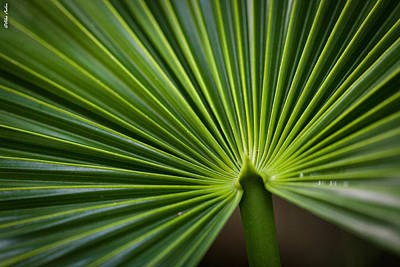 Radial Greens Art Print