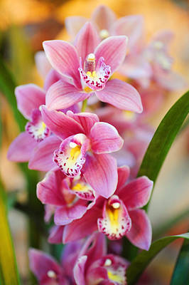 Photograph - Radiance Of Beauty. Orchids by Jenny Rainbow