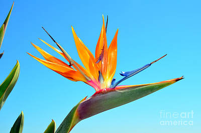 Photograph - Radiant Bird In The Sky by Debra Thompson