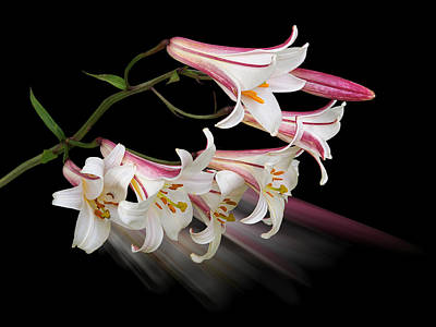 Radiant Image Photograph - Radiant Lilies by Gill Billington