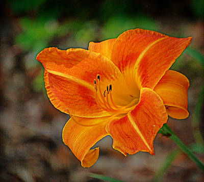 Art Print featuring the photograph Radiant Orange by Linda Brown