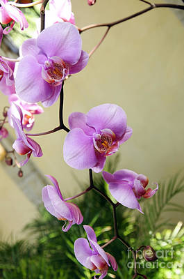 Photograph - Radiant Orchid Cascade 1 by Andee Design