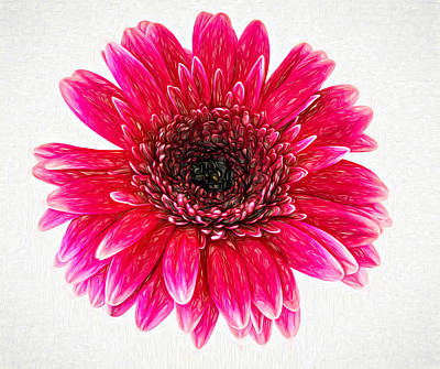 Gerbera Daisy Digital Art - Radiant - Paint by Steve Harrington