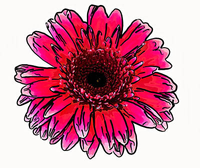 Gerber Daisy Photograph - Radiant Sketch by Steve Harrington