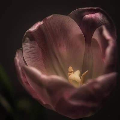Photograph - Radient Glow by Jen Baptist