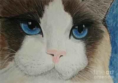Cat Painting - Ragdoll Cat by Cybele Chaves