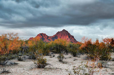 Photograph - Raggedy Top Mountain IIi by Donna Greene