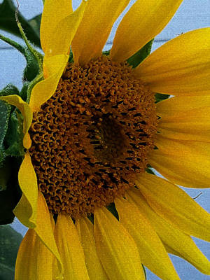 Rahab's Sunflower Art Print by Jeff Iverson