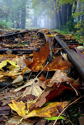 Rails And Leaves Art Print