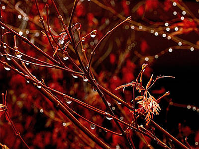 Burgundy Photograph - Rain Dance by Rona Black
