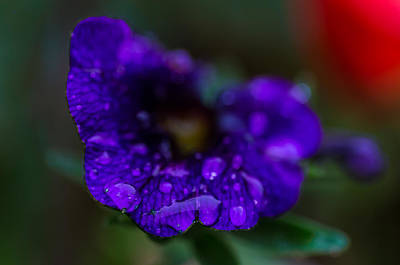 Photograph - Rain Droplets by Matthew Onheiber