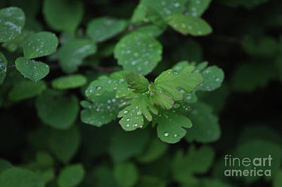 Photograph - Rain Drops by Heather L Wright
