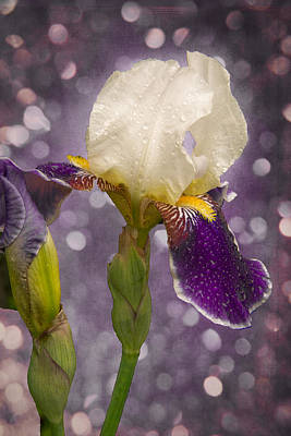 Photograph - Rain Drops Iris by Ludmila Nayvelt
