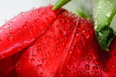 Rain Drops Art Print by Ivelin Donchev