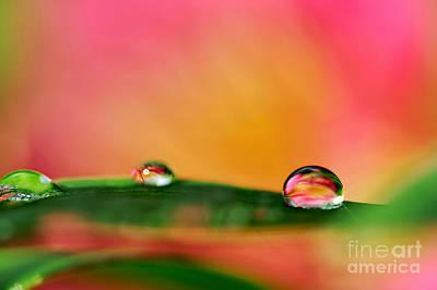 Photograph - Rain Drops by Kaye Menner
