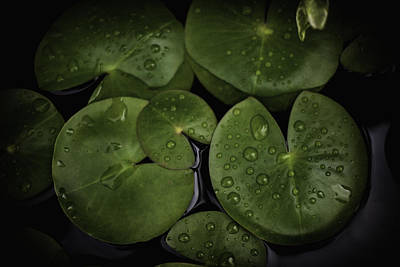 Rain Drops On Lilly Pads 1 Art Print by David Longstreath