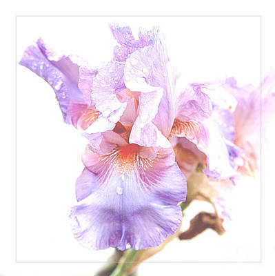 Photograph - Rain Drops On Soft Purple Iris Flower Abstrac by Jerry Cowart