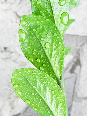 Hydro Wall Art - Photograph - Rain Drops by Tom Gowanlock