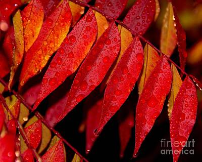 Photograph - Rain Fall Color by Patrick Witz