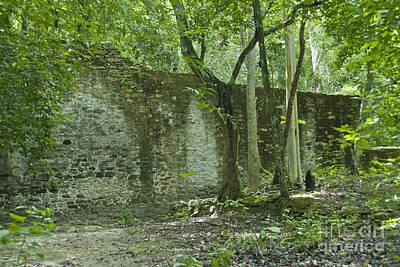 Rain Forest Jungle And Ruins At Calakmul Art Print