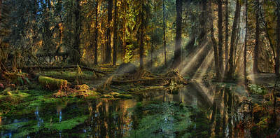 Rain Forest Sunbeams Art Print by Mary Jo Allen