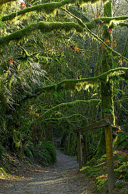 Photograph - Rain Forest Trail by Sharon Talson
