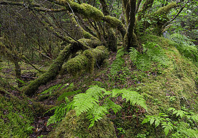 Photograph - Rain Forest Trees by Nathan Mccreery