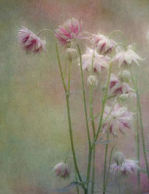 Nora Photograph - Rain Fresh by Angie Vogel