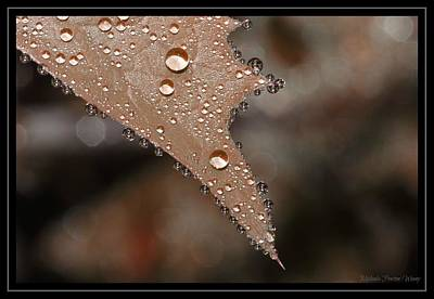 Photograph - Rain by Michaela Preston