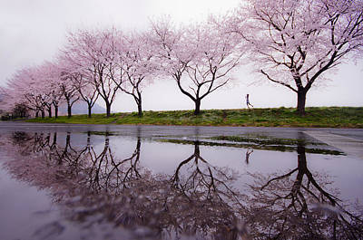 Cherry Blossoms Photograph - Rain Of Spring by Kouji Tomihisa