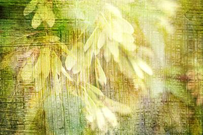 Rain On Leaves Art Print by Suzanne Powers