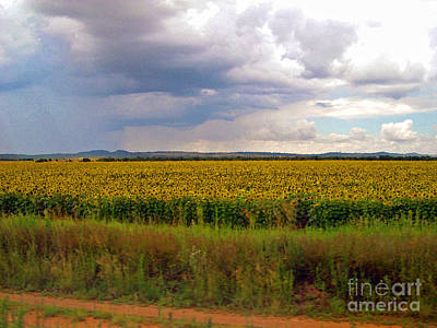 Photograph - Rain On Sunflower Field by Karen Adams