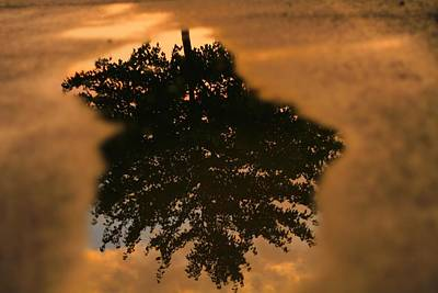 Rain Puddle Reflection At Sunset Art Print by Dan Sproul
