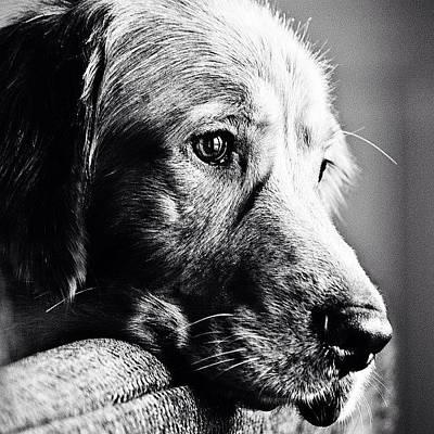 Dogs Photograph - Rain Rain Go Away.. Tucker Wants To by Scott Pellegrin