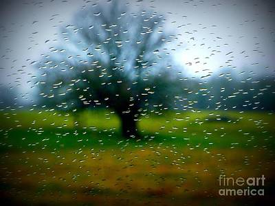 Photograph - Rain Tree by Susan Garren
