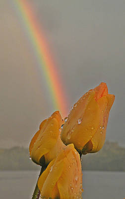 Photograph - Rainbow And Tulips by Brian Chase