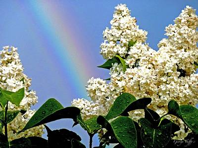 Photograph - Rainbow And White Lilac by George Tuffy