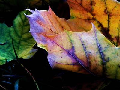 Photograph - Rainbow Autumn by Christian Rooney