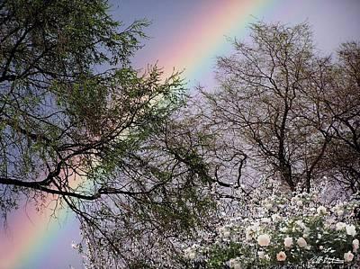 Rainbow Original