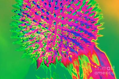 Photograph - Rainbow Bright by Audreen Gieger