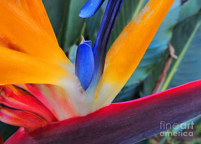 Photograph - Rainbow Bright by Kristine Merc