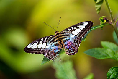 Photograph - Rainbow Butterfly by Vanessa Valdes